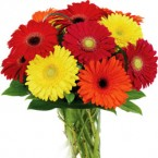 send 10 mixed gerbera in vase delivery