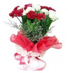 send 20 mix fresh red and white crnations bouquet delivery