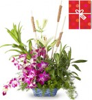 send Arrangement of orchids and lilies with Greeting Card delivery