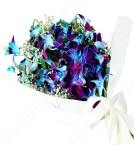 send Blue Purple Orchid delivery
