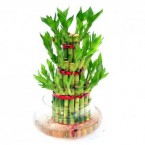 send Lucky bamboo delivery