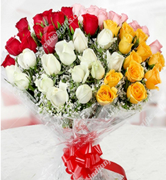 50 Multicolor Roses in Cellophane Packing